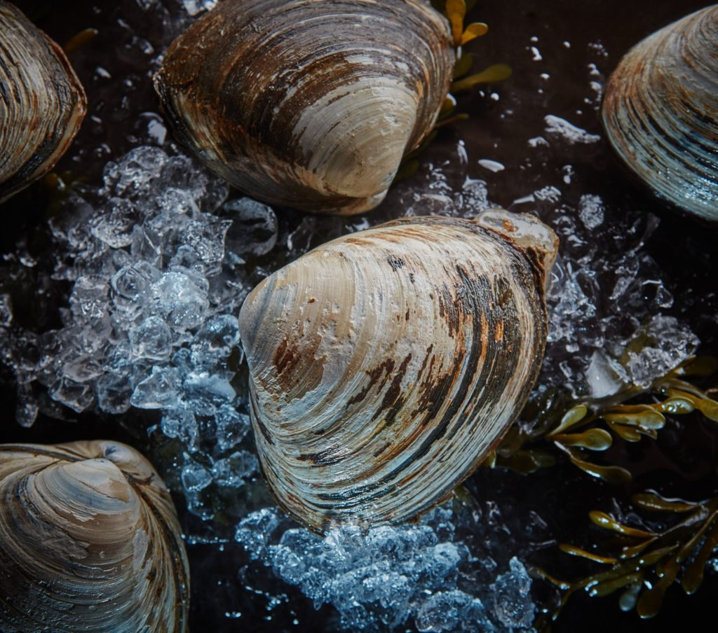 Свежемороженные морепродукты